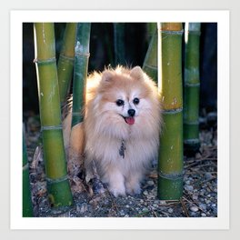 Buffy, the Celebrity Pomeranian, in Bamboo Forest Art Print