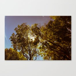 Forest Sun Canvas Print