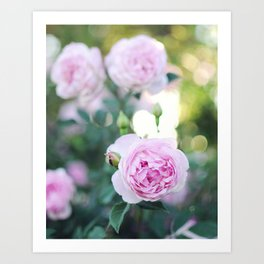 Magic Hour Roses Art Print