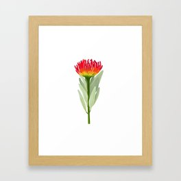 Flame Protea Flower Framed Art Print