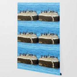 Cormorants Basking on The Big Rock Wallpaper