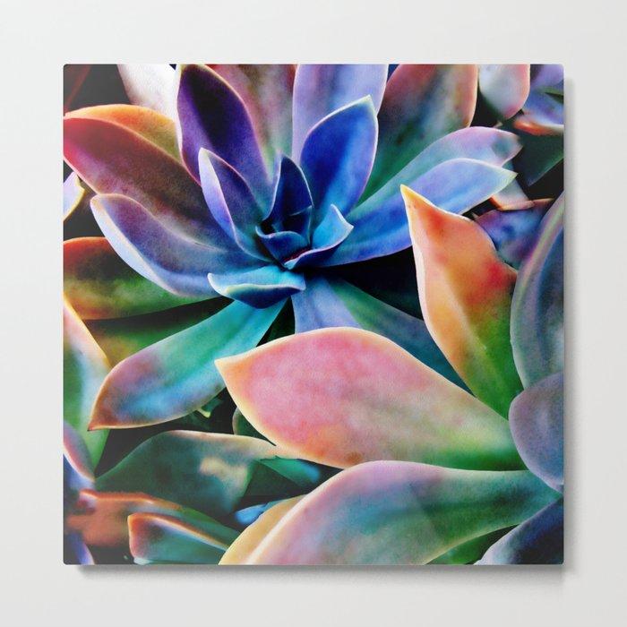 Spectacular Succulents 2 Metal Print