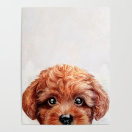 Toy poodle red brown Dog illustration original painting print Poster