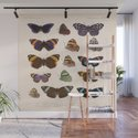 Vintage Hand Drawn Scientific Illustration Insects Butterfly Anatomy Colorful Wings by enshape