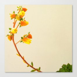 You're my sunshine succulent photo Canvas Print