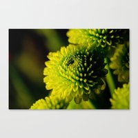 lime Canvas Prints featuring Lime by Nicole Stamsek