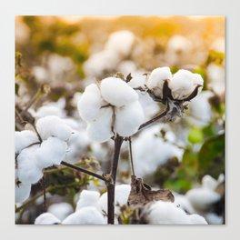 Cotton Field 4 Canvas Print