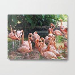 Tropical pink Flamingo birds Metal Print
