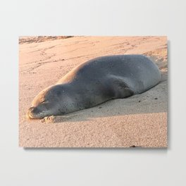 """Monk Seal on Poipo Beach"" Photography by Willowcatdesigns Metal Print"