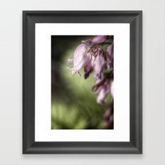 bleeding heart. Framed Art Print