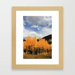 Aspens in Colorado Framed Art Print