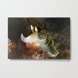 Hilton's Aeolid from Channel Islands Metal Print