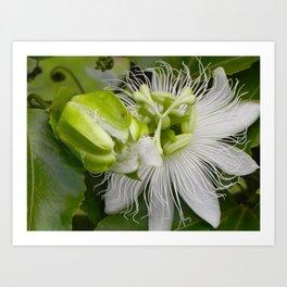 """Passiflora (i)"" by ICA PAVON Art Print"