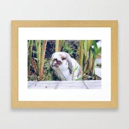 Bunny smiling in the garden Framed Art Print