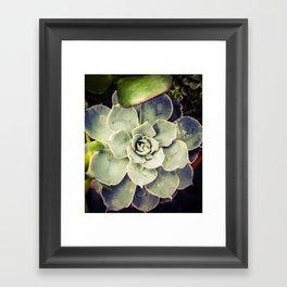 Succulent 3 Framed Art Print