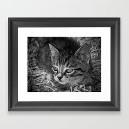 Baby Kitten Framed Art Print