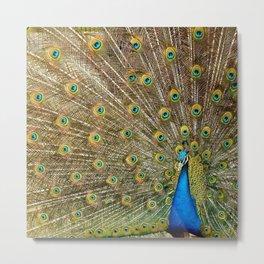 Zee Peacock Metal Print