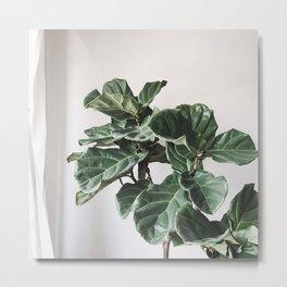 Ornamental Fig Metal Print