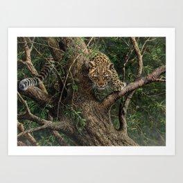 Amur Leopard Cub in Tree Art Print