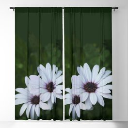Friendship - Two African Daisies Blackout Curtain