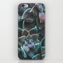 Botanical Gardens II - Succulents #321 iPhone Skin