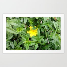 Yellow  Life Art Print