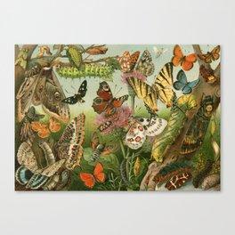 Butterflies & Caterpillars Canvas Print