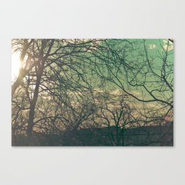 trees & sky. Canvas Print