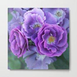 Deep purple roses. Metal Print