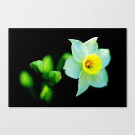 Translucent Flower - Color Version Canvas Print