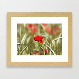 Hot Poppy Framed Art Print