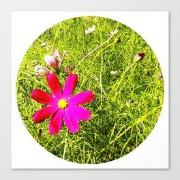 Wild Flowers (Circle) Canvas Print