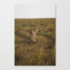 Cheetah Trail Canvas Print
