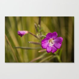 Pink on green #2 Canvas Print