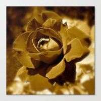 rose gold Canvas Prints featuring Gold Rose by SoCoArt