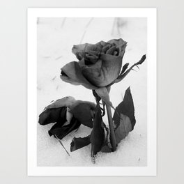 Rose in the Snow Art Print