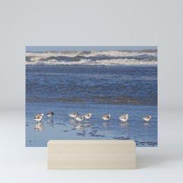 Group of Sanderlings | Calidris Alba | beach, Terschelling, Wadden Islands, The Netherlands | Fine art bird photography Mini Art Print