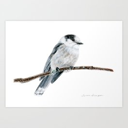 Gray Jay by Teresa Thompson Art Print