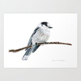 Gray Jay by Teresa Thompson Art Print