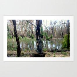 Reflecting after a bush Fire Art Print