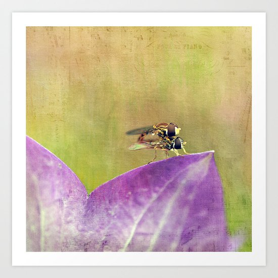 Dance of the Hoverfly Art Print
