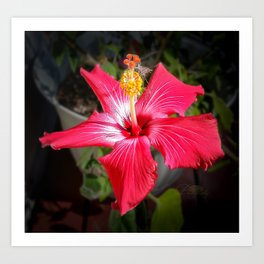 September hibiscus Art Print