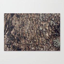 Tree Skin 4 /4 Canvas Print
