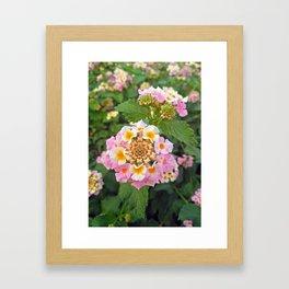 Lantana camara flower garden Framed Art Print