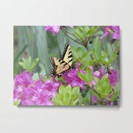Monarch Butterfly on Azalea Flower Metal Print