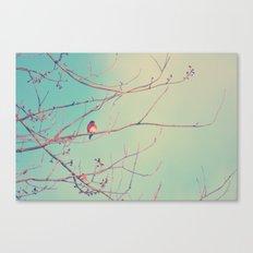 Bluebird Blue Canvas Print