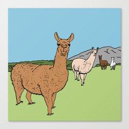 Llama-rama Canvas Print