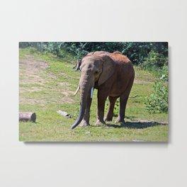 Birmingham Elephant Metal Print