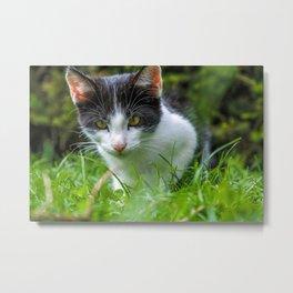 beautiful cat in yard closeup Metal Print