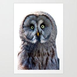 Big Moon Owl Art Print